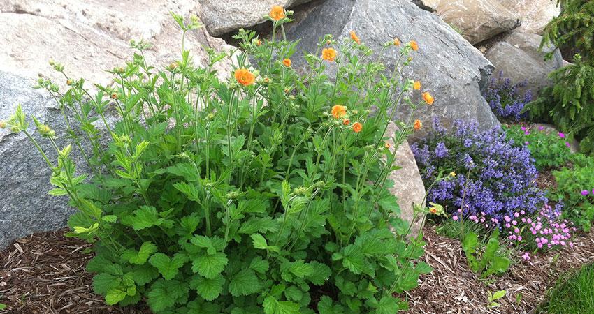 Natural rock plantings